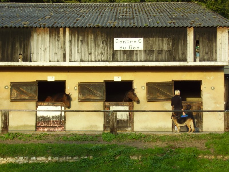 More horses and the equestrian centre